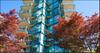 Pacific Horizons   --   1427 DUCHESS AV - West Vancouver/Ambleside #6