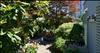 Argyle Fourplex   --   2150 - 2156 ARGYLE AV - West Vancouver/Dundarave #9