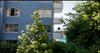 Wedgewood Terrace   --   1730 DUCHESS AV - West Vancouver/Ambleside #6