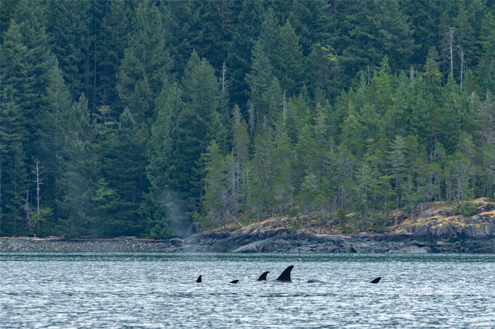 DL 2515 Bute Inlet - Isl Small Islands (Campbell River Area) Land for sale(885552) #28