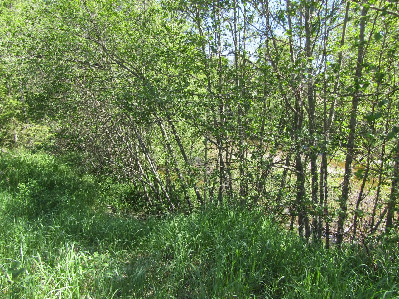 Lots 1-9 HIGHWAY 3 - Greenwood for sale(2461528) #10