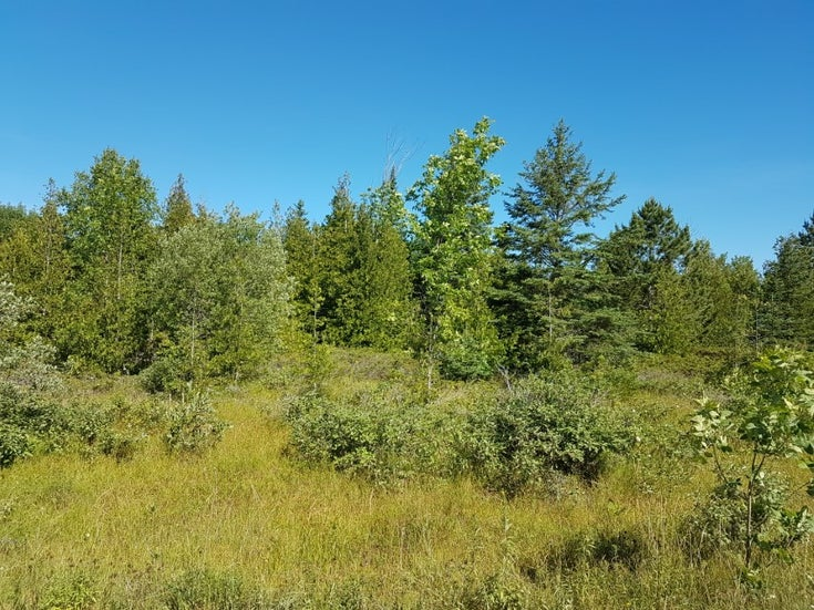 285 Cape Chin South Road, Northern Bruce Peninsula, ON. N0H 1W0 - North Bruce Peninsula Vacant Land for sale(204424)