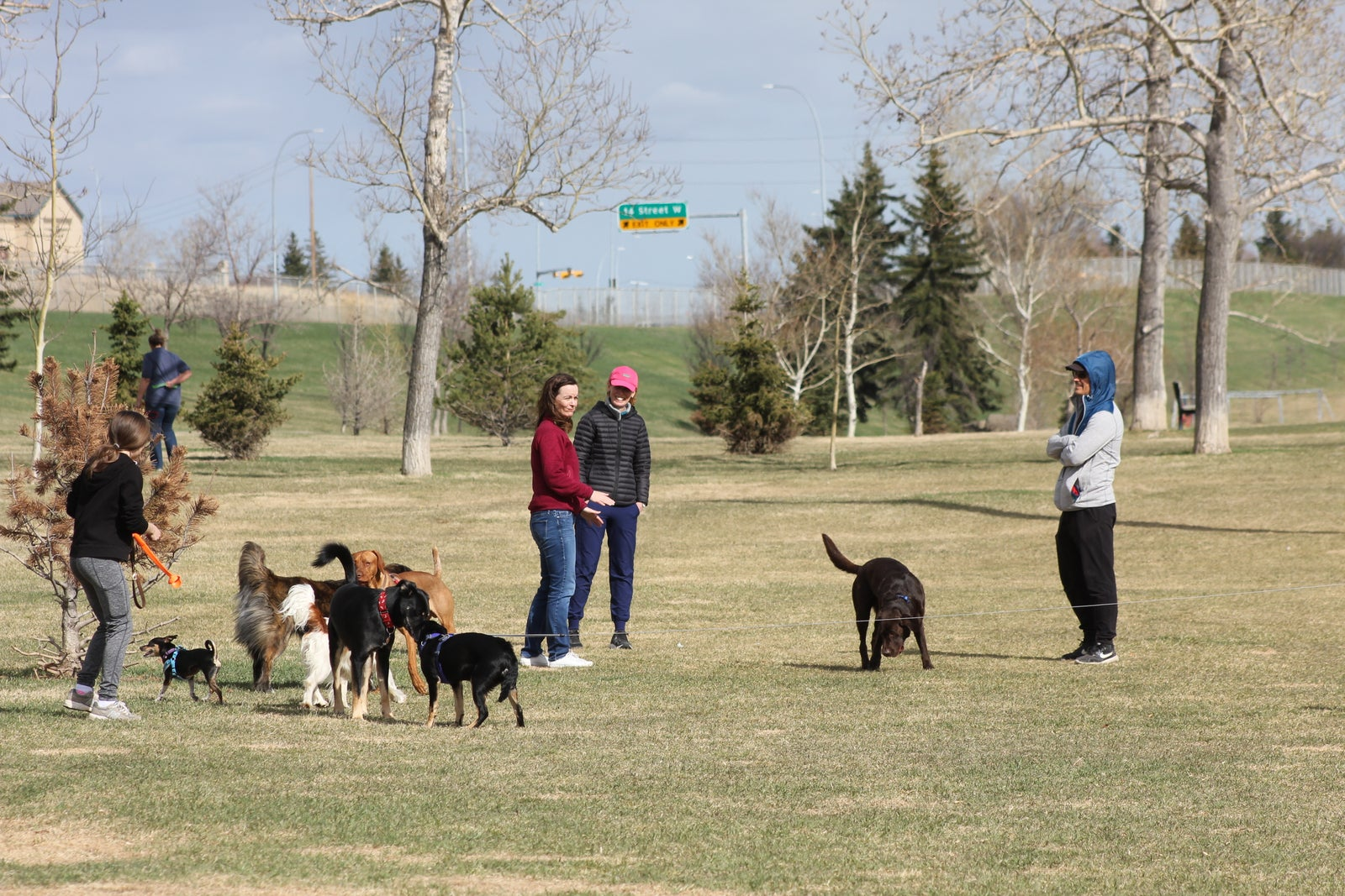 One of Triwood Off Leash Area's