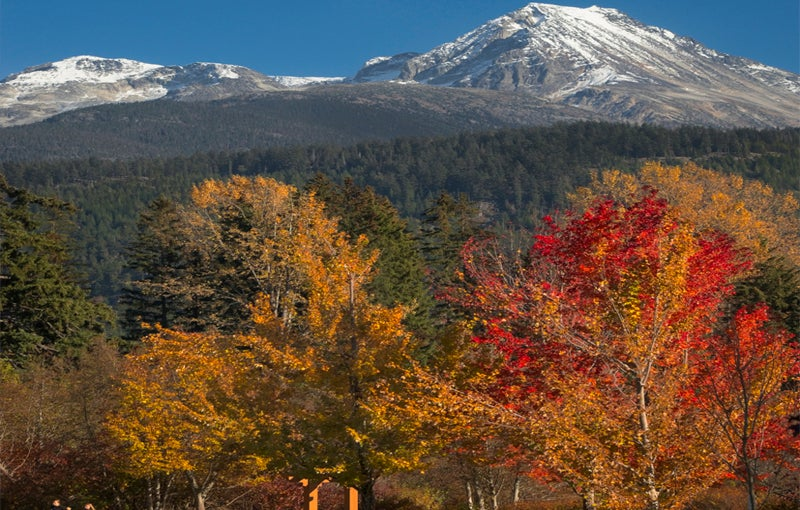 Fall colour trees with snow on Armchair mountain in background