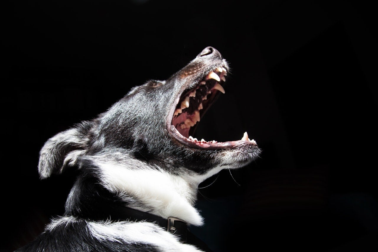 dangerous dog bite dog attack lawyer Vancouver British Columbia