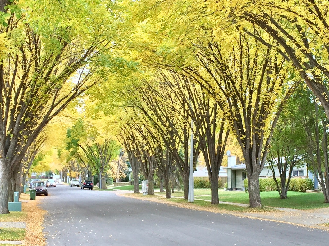 fall leaves on the trees on St. Albert's Forest Drive