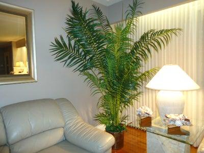 spot light on potted plant
